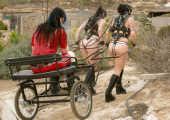Two kinky ponygirls in trainig.